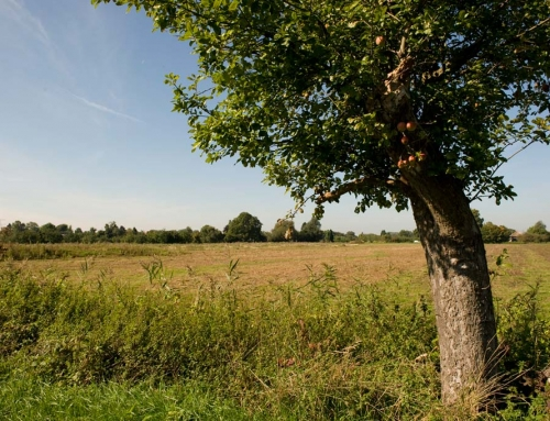 Impressie landgoed boom
