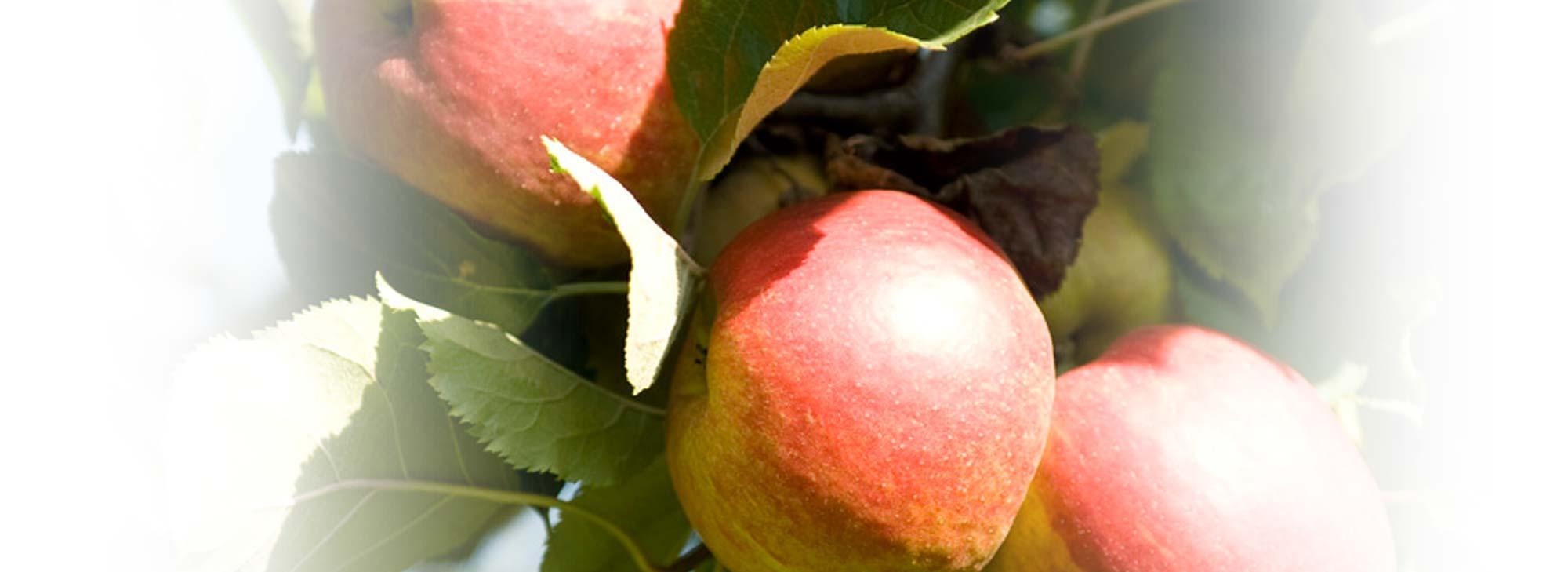 slider-appels