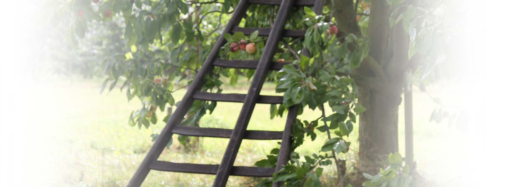 slider-landgoed-appelboom-trap