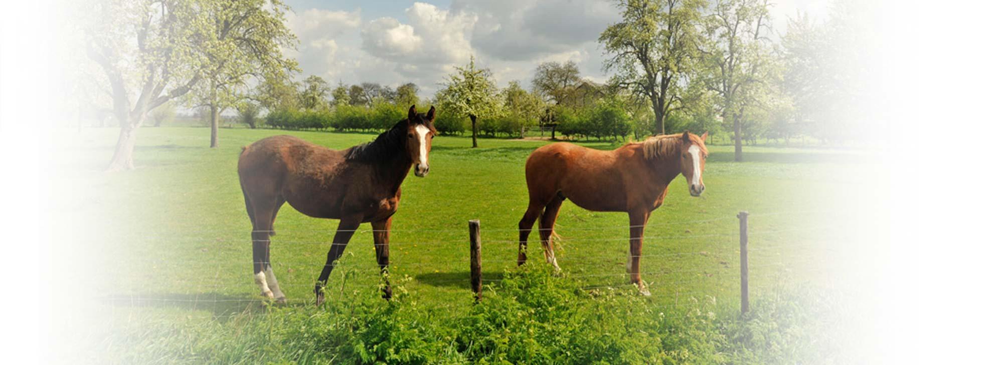 slider-landgoed-paarden