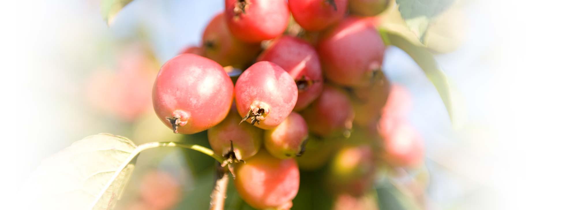 slider-landgoed-rozenbottel