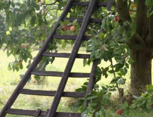 Impressie trap tegen appelboom
